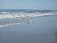 birds beach