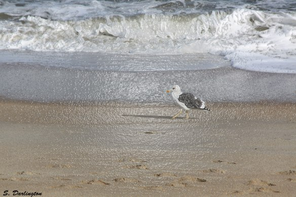 1228-seagull