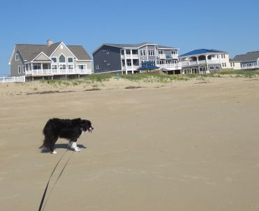 scout on the beach