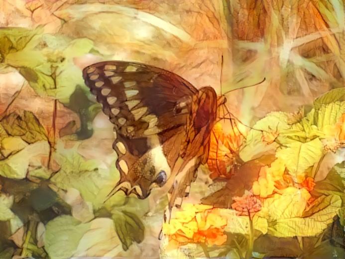 deep dream butterfly