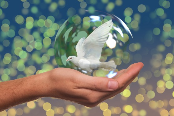 peace-dove-2489589_1920
